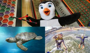 RockReef and Oceanarium, the Bournemouth Aquarium join forces to offer discounted tickets